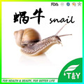 Snail mucus extract powder for cosmetics grade