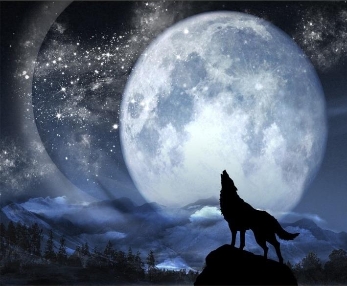 Customized 3d Photo Wallpaper Wolf Full Moon Night Mural