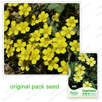 60 Seeds / Pack Surface Plant Seeds Potentilla Chinensis Balcony Potted Flowers Herba Potentillae Chinensis Seed