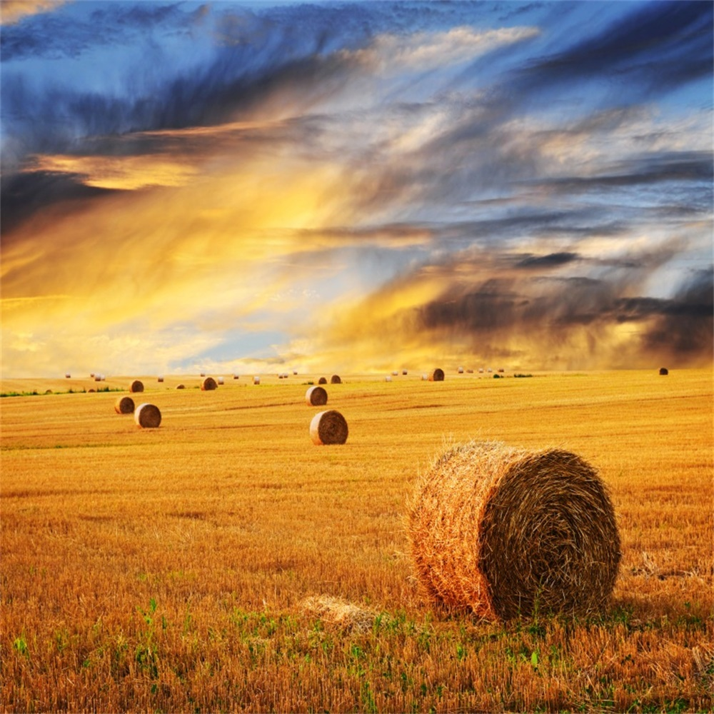 Laeacco Autumn Sunset Field Hay Roll Scenic Photography Backgrounds Customized Photographic Backdrops For Photo Studio