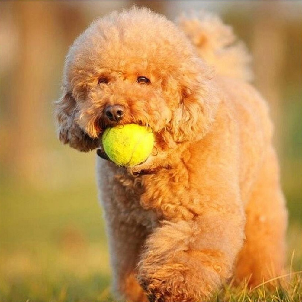 6.5cm Tennis Ball Pet Sport Throwing Toys For Dog&Cat Entertainment Toy House Pet Interactive Play Tool