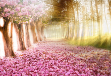 Laeacco Spring Flowering Tree Sunlight Baby Portrait Natural Scene Photography Background Photographic Backdrop For Photo Studio