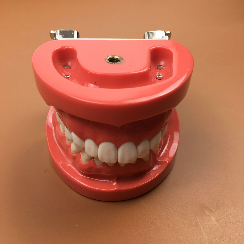 1pc dental training teeth models dental study teeth models 28pcs teeth, hard gum, FE jaw frame 13007 dh106 hard gum 32pcs teeth standard jaw model medical science educational dental teaching models