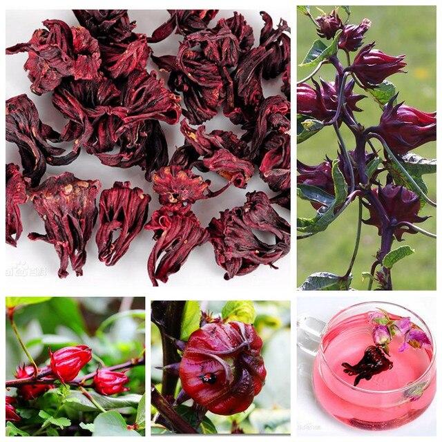100 Pcs Bag Roselle Ilibiscus Roselle Juice Tea Hibiscus