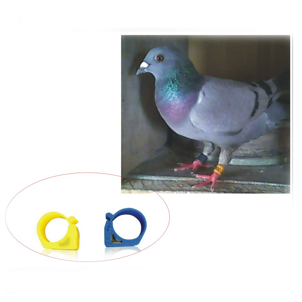 100PCS/lot Pigeon Special Poultry Automated Management TK4100 125KHZ RFID Foot Ring With Electronic Tags Siez 0.9cm