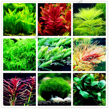 100Pcs/Bag Water Grasses Random Aquatic Plant Grass