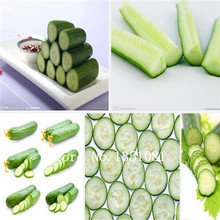 100 Mouth crisp cucumber seeds of new varieties of fruits and vegetables seeds, whole female seed salad, Free Shipping