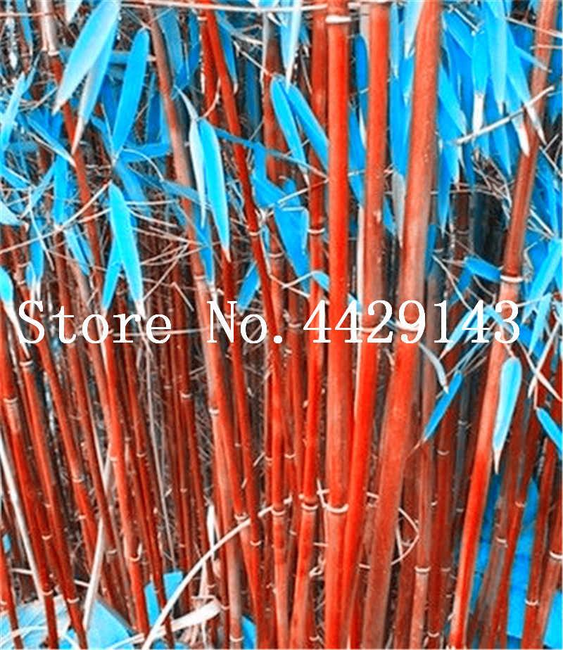 حقيقية نادر 50 قطع الأزرق الخيزران بونساي مكافحة الإشعاع تمتص الغبار شجرة بوعاء Pnat للمنزل حديقة الزينة بونساي