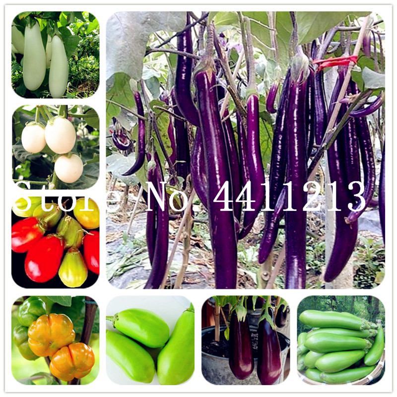 50 Pcs Black Purple Yellow Eggplant,Italian Eggplant Bonsai,Rare Aubergine, Organic Fruit Vegetable,Plant For Home Garden