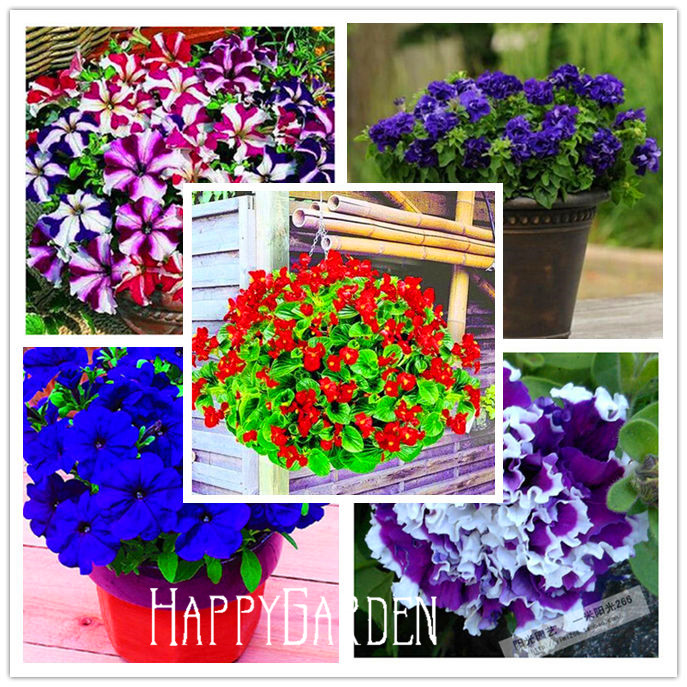 Flower seeds Petunia Super Cascade Mixed 100 PELLETS (HANGING BASKETS)garden helper, Free shipping,#93B7N0