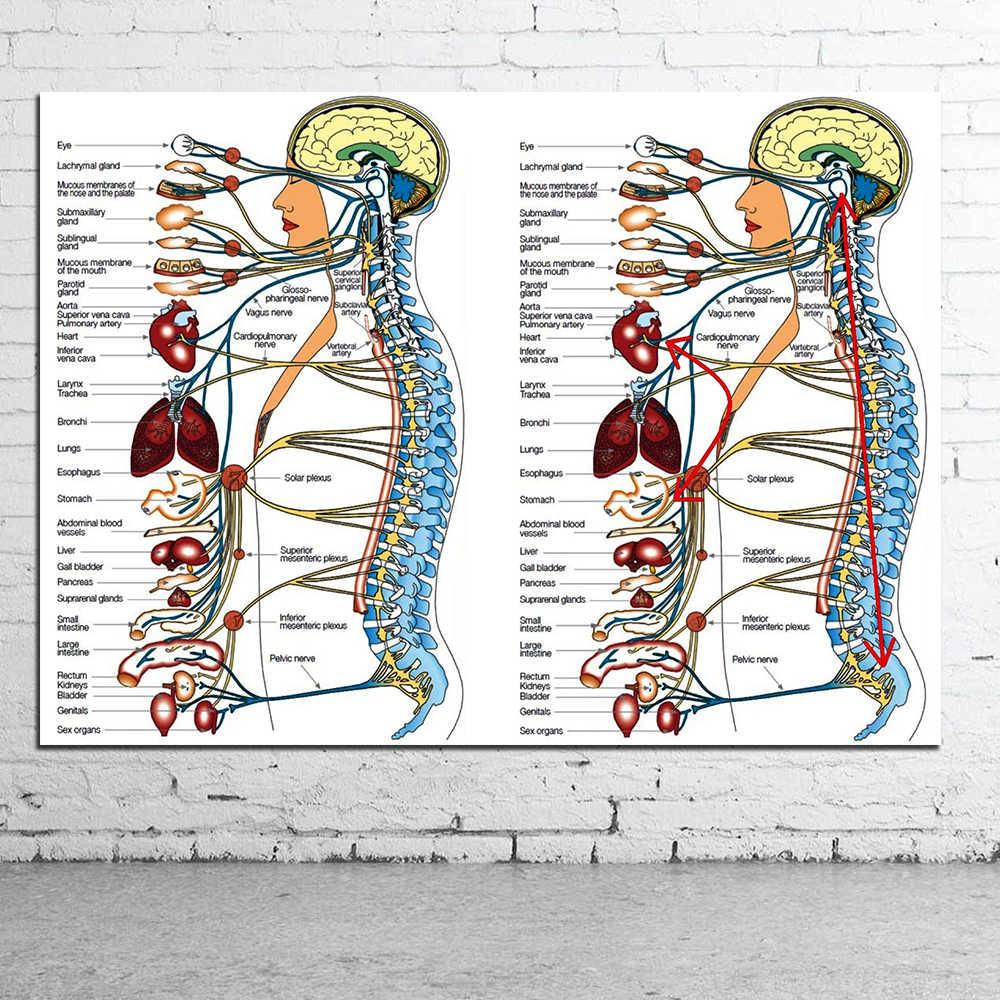 Холст для медицинских знаний, человеческий камень