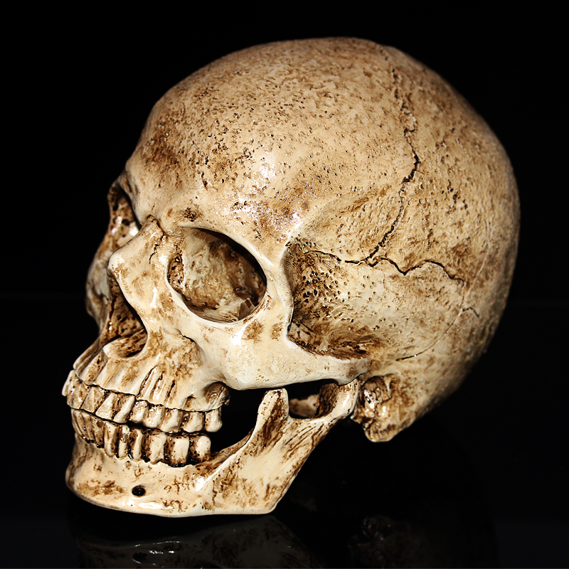 Animal Antique Skull 1:1 Sculpture  Resin Model Halloween Decoration Medical Painting Movie Props Home Decoration Crafts
