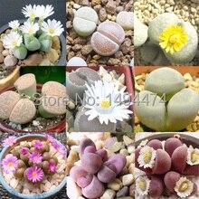 Бонсай цветы крытый мясистые растения здоровье и каменные цветы семена расслоение кролика-150 шт. семена