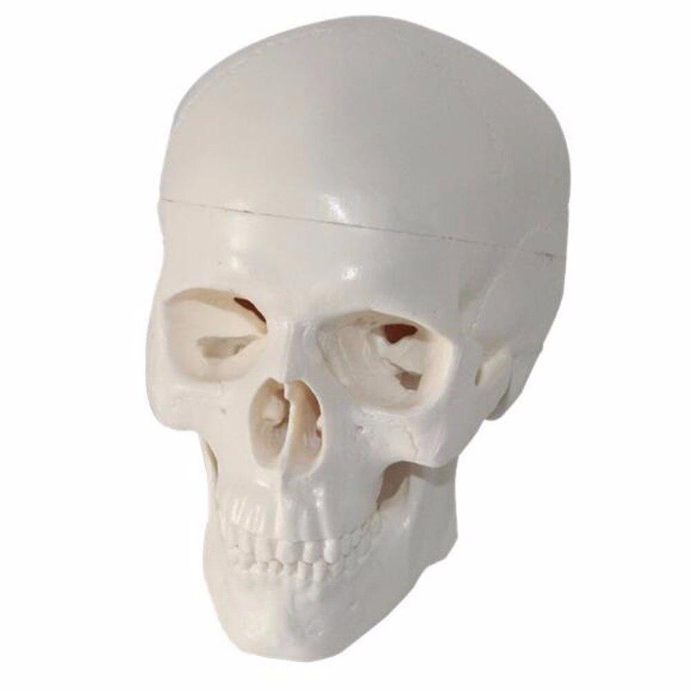 Cerca Voli 1 Pz/pacco Freddo Pvc Mini Cranio Testa Umana Per L'arte E Medicina E Anatomia Di Istruzione Aroma Fragrante
