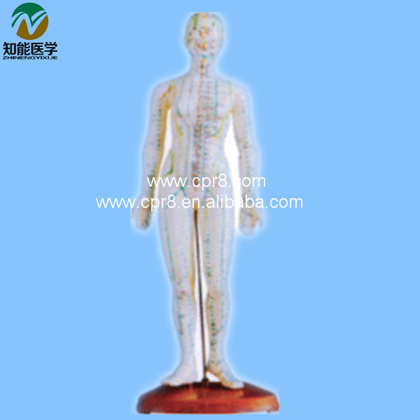 Acupuncture Human Body Model   (in Chinese) 46CM  BIX - Y1010  MQ060
