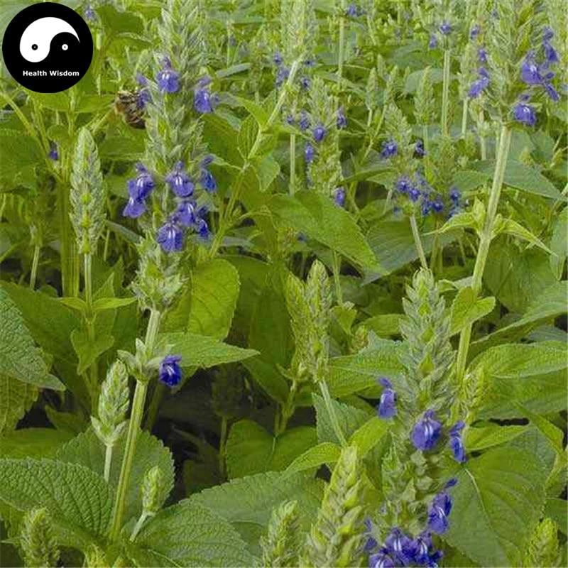 Buy Chia Semente 200pcs Plant Chinese Salvia Hispanica Semente Qi Ya Zi