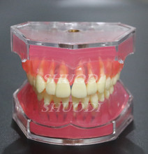 Dental Study Teaching Model Standard Model Removable Teeth Soft Gum ADULT TYPODONT Model(China)