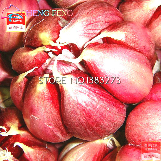 Garlic Seeds Red Healthy Bonsai Seeds  Plant Decoration For Home & Garden