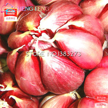 100pcs Garlic Seeds Red Healthy Bonsai Seeds Green Vegetable Seeds Plant Decoration Very Easy Grow Home & Garden Free Shipping
