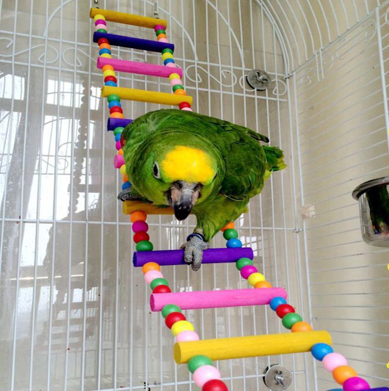 Parrot Supplies Free Shipping - altamira.ml 10% off Get Deal parrot supplies free shipping - altamira.ml 10% off Get Deal Bird Supplies and Products & Accessories | Discount Bird 10% off Get Deal Pet Mountain is the online.