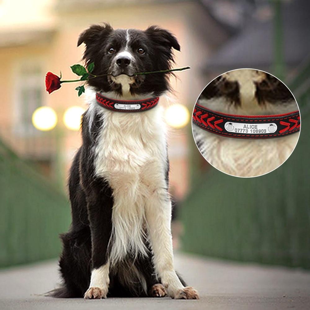 collier de chien avec numero de telephone