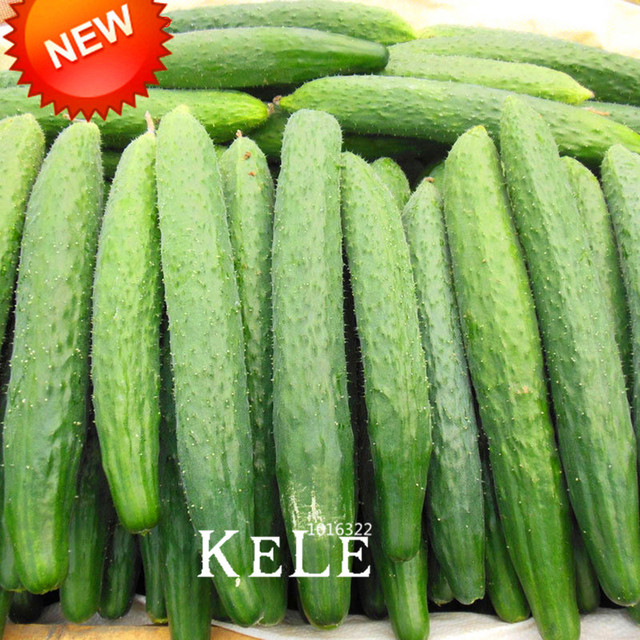 Cucumber Seeds Fruits and Vegetable Seed