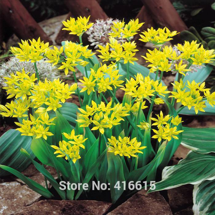 popular exotic yellow flowersbuy cheap exotic yellow flowers lots, Beautiful flower
