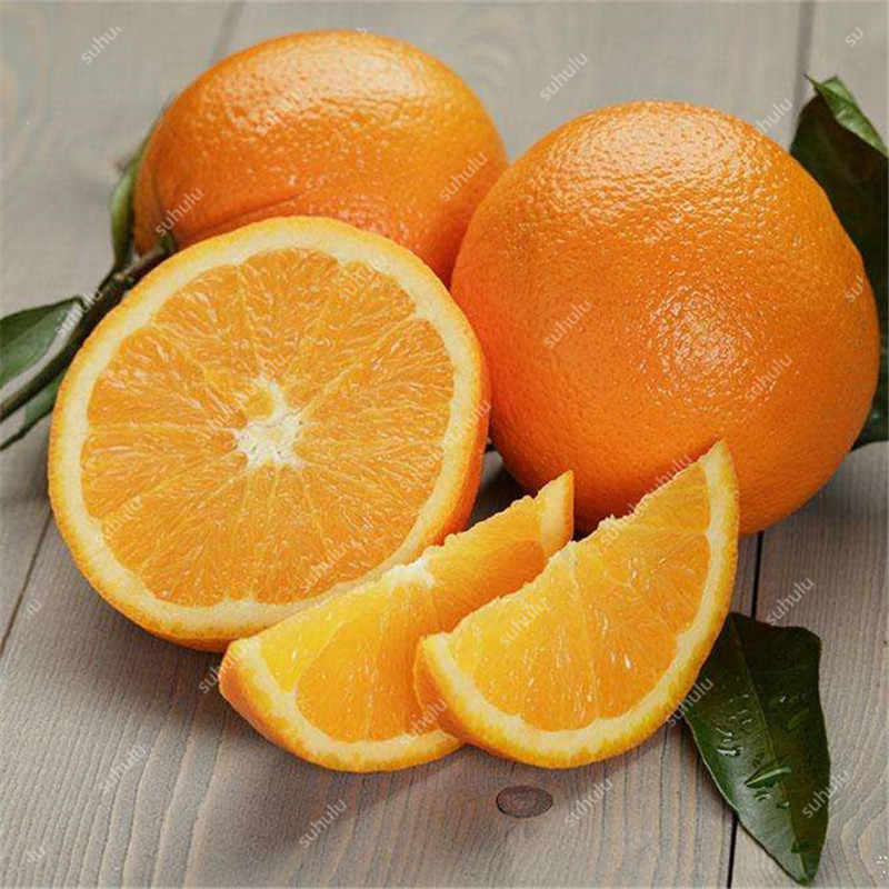 Promosi Besar! 20 Buah Manis Mandarin Orange Bonsai, Emas Bonsai Pohon Buah Pot Tanaman untuk DIY Rumah Taman Penanaman