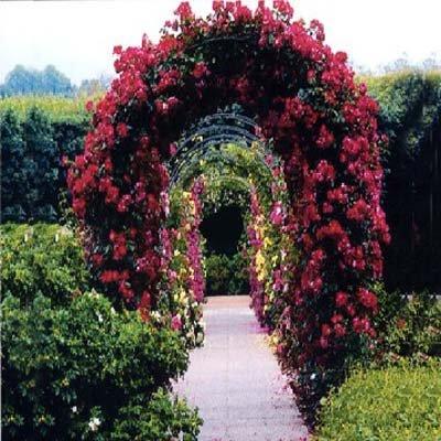 2 M Acero Jardin Color De Rosa Del Arco Enrejado Ivys Plantas - Arcos-de-jardin