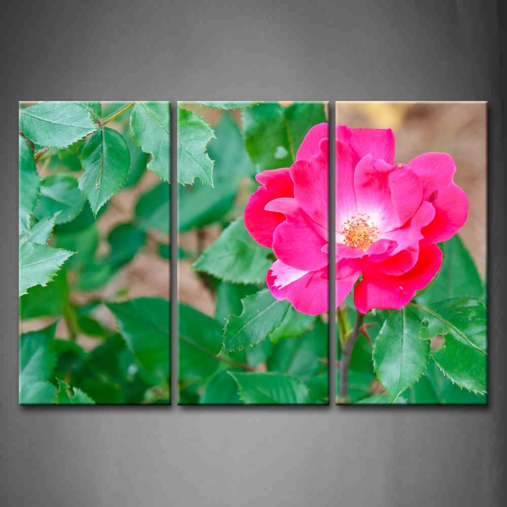 Настенная картина в рамке фотографии красный роза Кустарниковая принт на холсте Украшения дома и офиса