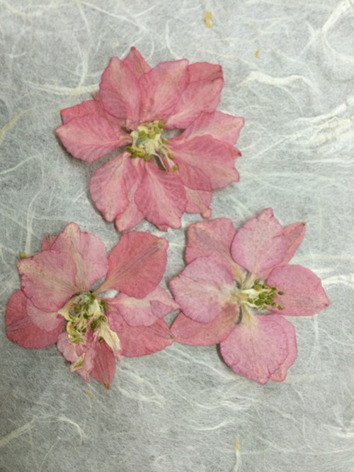 Us 15 99 Press Flower Dried Flower Diy Handmade Floral Pink Flower Delphinium Sale 1 Lot 10 Bags Free Shipment In Artificial Dried Flowers From