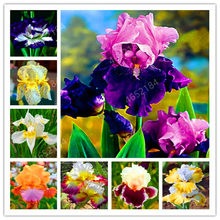 100 Pcs Iris Bonsai, Many Kinds Of Color Iris Potted Iris Orchid Rare Perennial Flower Bonsai Plants For Home Garden(China)