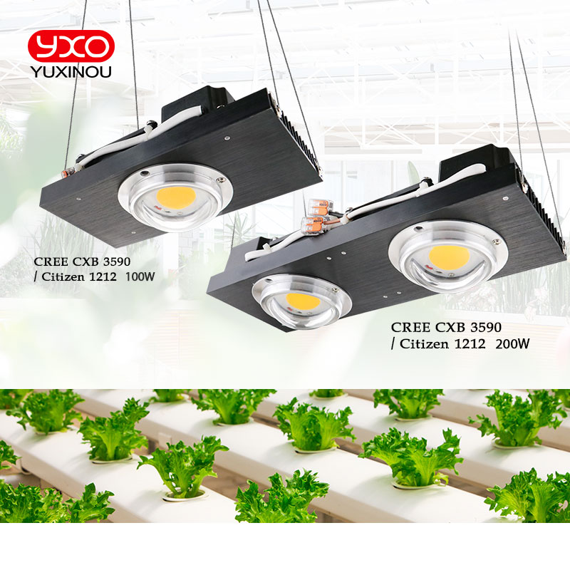 CREE CXB3590 COB LED Grow Light Full Spectrum 100W 200W Citizen LED Grow Lamp For Indoor Tent Greenhouse Hydroponic Plant Flower