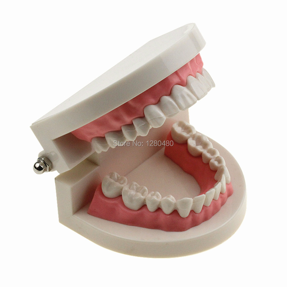 Dental Equipment Teeth Model For Teaching Early Learning / Demo / Can Pull Teeth / Mouth Tooth Model Free Shipping