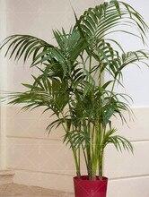 10pcs Palm Tree Seeds Garden Ornament Evergreen Trachycarpus Fortunei Air Purification Bonsai Tropical Landscape Plants