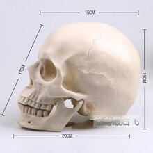 Белый 1: 1 модель человеческого черепа в натуральную величину модель черепа из полимера художественная обучающая модель человеческого скелета