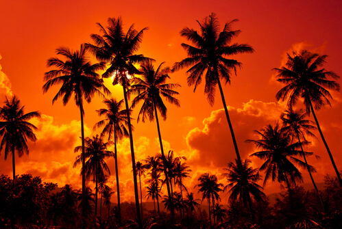20x30 inches posters sunset coconut trees landscape poster wall