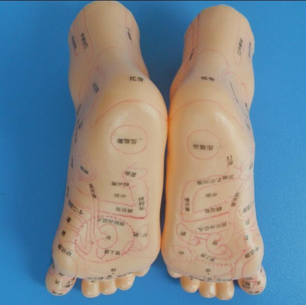 Massage Foot Model 20cmMassage Foot Model 20cm