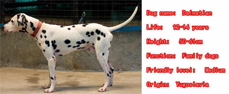 2019 Dễ Thương Dalmatian Dog Động Vật Ví Túi Xách Quyến Rũ Handmade Mặt Dây Chuyền Keychain Cho Túi Xe Phụ Nữ Người Đàn Ông Cô Gái Chàng Trai Tình Yêu Đồ Trang Sức k076