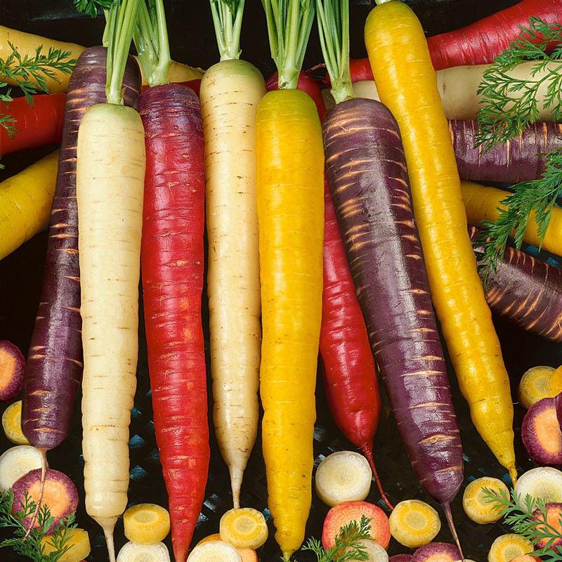 """Résultat de recherche d'images pour """"variété de carotte"""""""