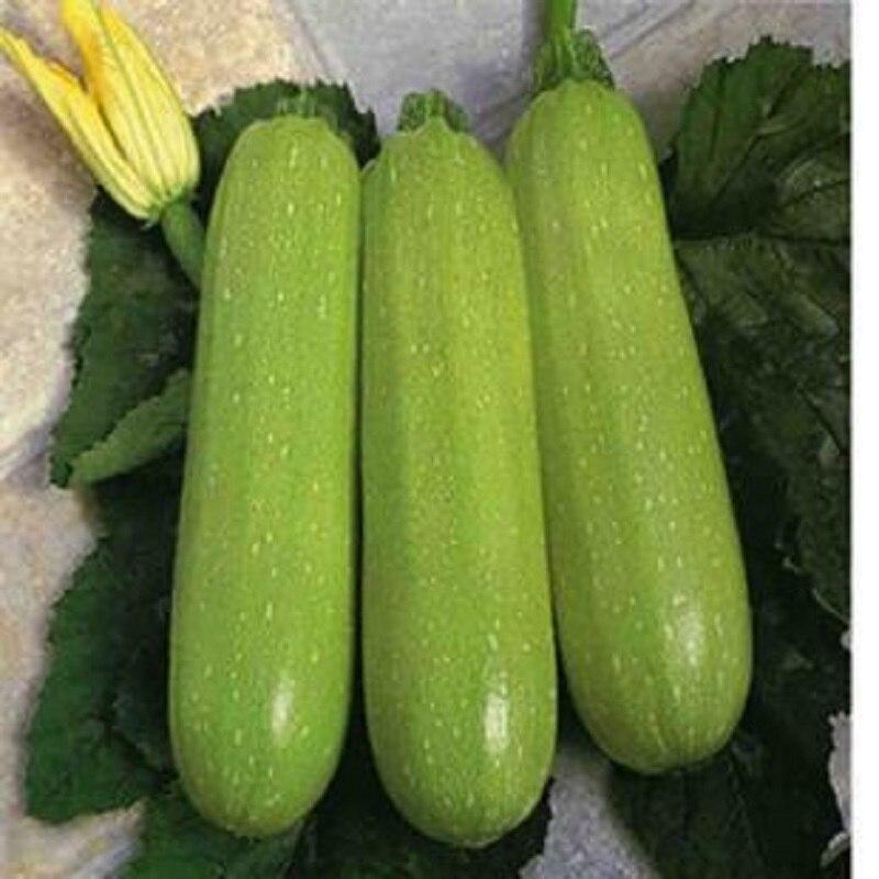 Ya green zucchini seeds 10Pcs healthy vegetable seeds