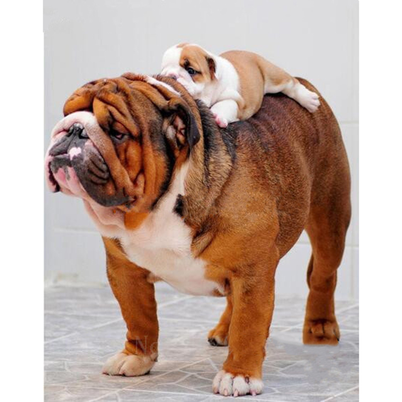 웃 유5d DIY Cuadros de punto de cruz diamante Bordado Bulldog y bebé ...
