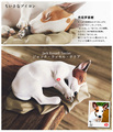 customize! 2pcs Jack Russell Terrier pets cute sleep Squatting Dog puppy models kids toys for children collection