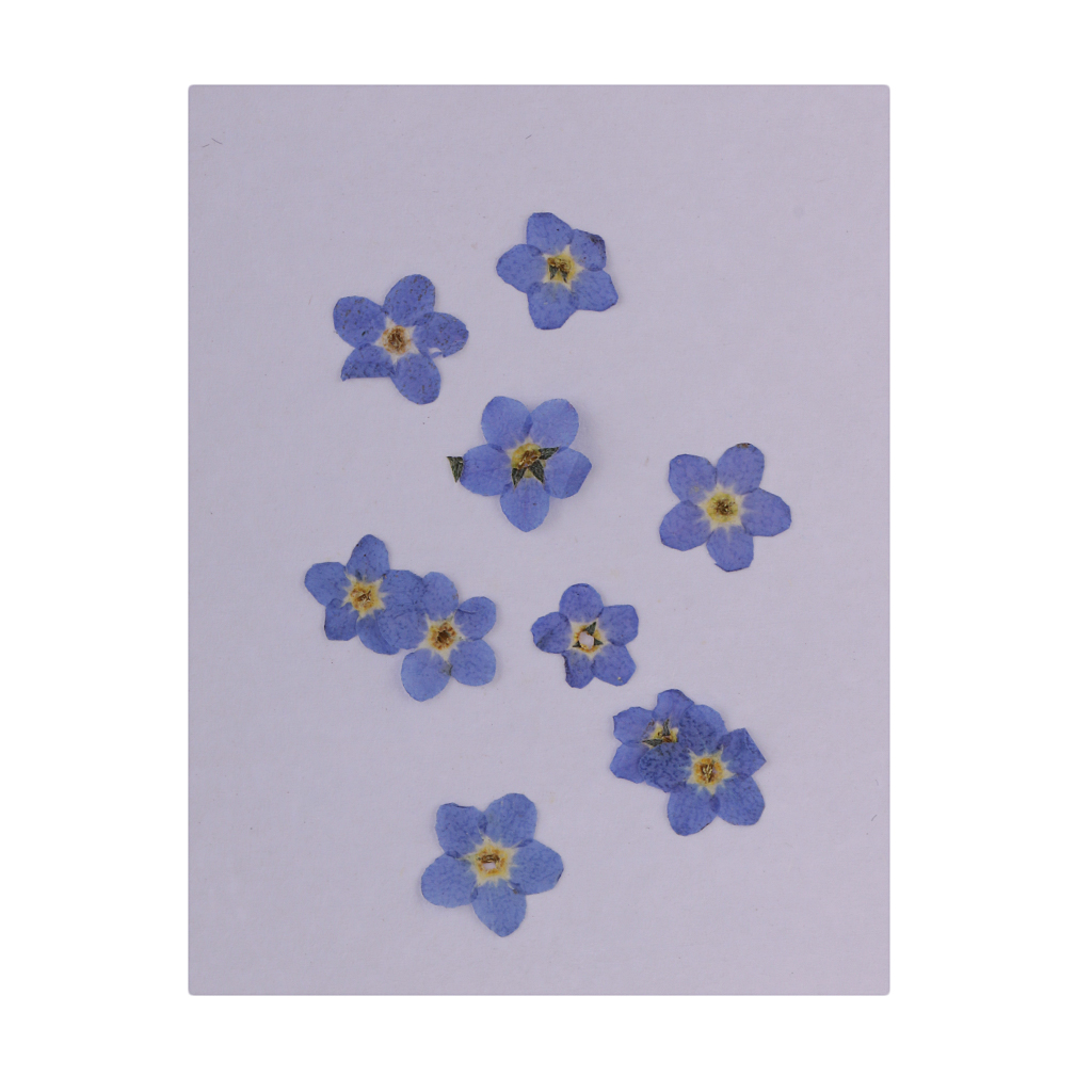 Lila Jewellery Forget-me-not Shaped Lapel Pin Blue Flower In Gift Box With Quote