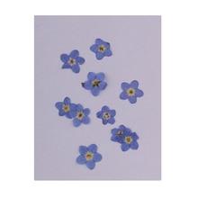 50 шт. прессованный настоящий forget-me-Not сушеный цветок для самостоятельного изготовления ювелирных изделий Ожерелье Подвески для изготовления карт