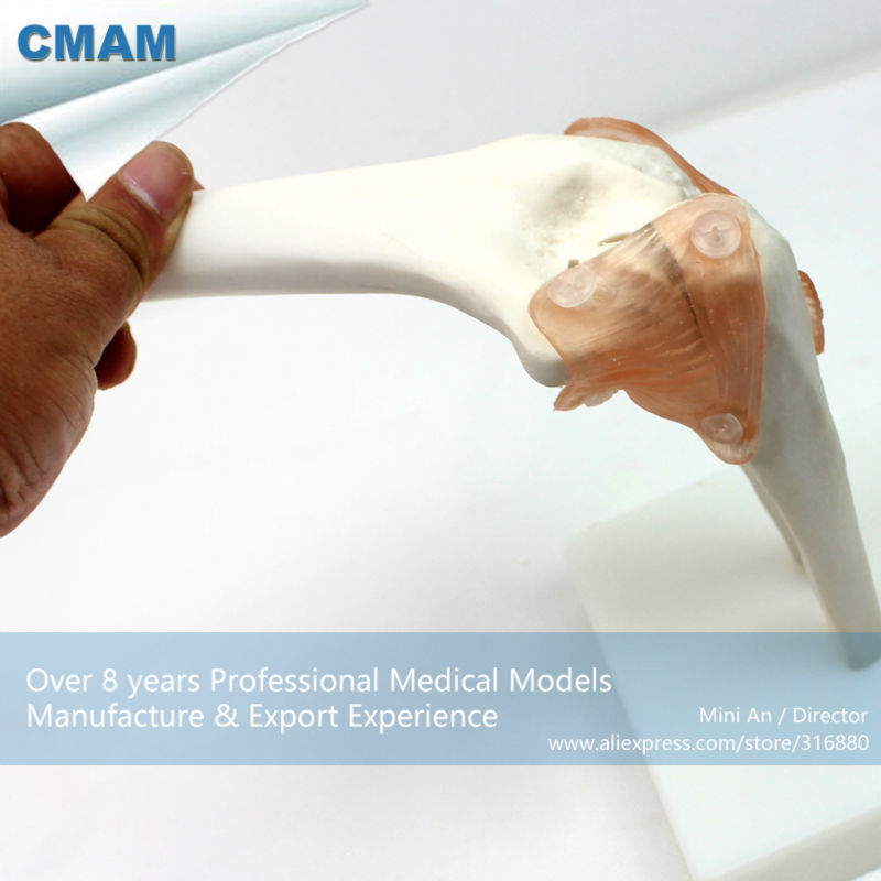 CMAM-JOINT10 Human Skeleton Elbow Joint Models include Flexible Artificial Ligaments plastic standing human skeleton life size for horror hunted house halloween decoration