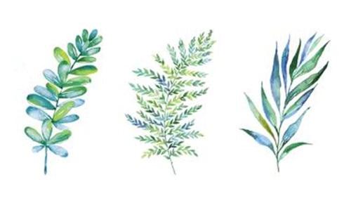 https://ae01.alicdn.com/kf/HTB1JjDAbqmWQ1JjSZPhq6xCJFXar/Waterproof-Temporary-Fake-Tattoo-Stickers-Watercolor-Blue-Green-Plant-Leaf-Design-Body-Art-Make-Up-Tools.jpg_640x640.jpg