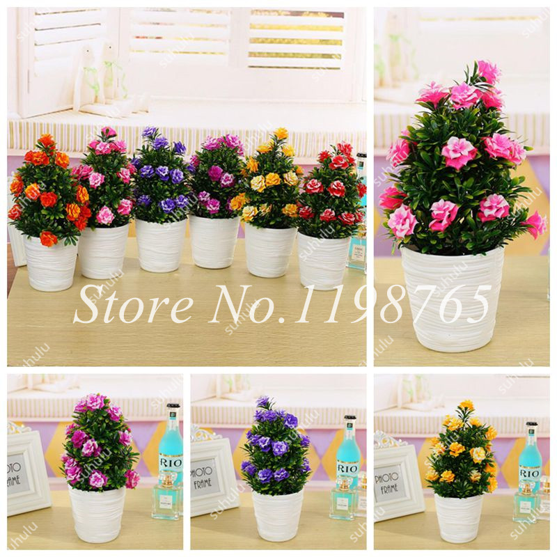 100 Pcs/Bag Mini Rose Tree,Rose Seeds Colorful Bonsai Tree Flower Seeds Indoor Plant Balcony & Yard Potted For Home Garden