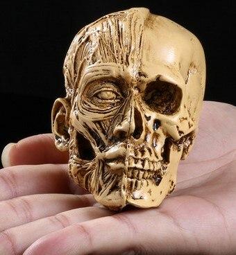 높은 정밀도 개인화 된 장신구 수지 근육 두개골을 가진 작은 의학 인간적인 근골격계 높은 가장 모의 인간적인 두개골