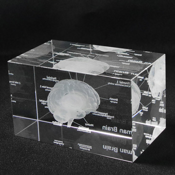 3D Human Anatomical Model Paperweight Laser Etched Brain Crystal Glass Cube Anatomy Mind Neurology Thinking Medical Science Gift